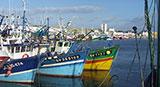 Activité port de Penmarc'h