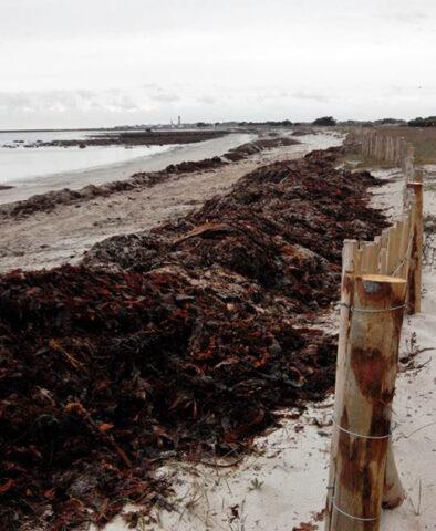 Fortification du trait de côte, plage du Ster à Kérity